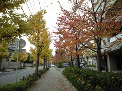 Niigatashogakko