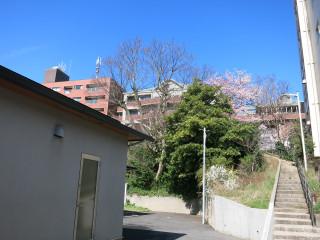 Sakura1601