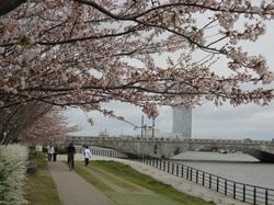 Sakura1001