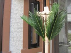 Palm1102