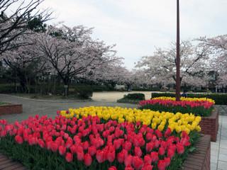 Sakura1301